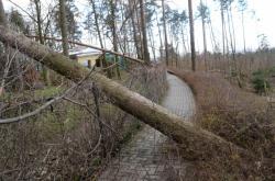 Vyvrácené stromy poškodily i několik výběhů