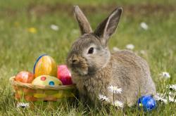 Velikonoční zajíček a barevná vajíčka