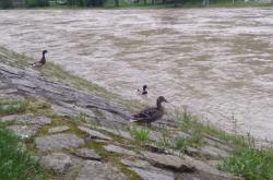 Rozvodněná řeka Bečva v Hranicích