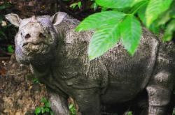 Nosorožec Tam
