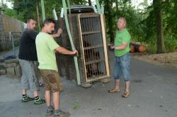 Nakládka medvědů v Zoo Olomouc