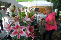 Prodejci na letní etapě výstavy Flora Olomouc