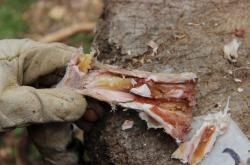 Rekonstrukce získávání morku z kostí