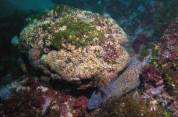Středomořský korálový útes
