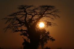 Oblast dnešní Botswany byla před stovkami tisíc let pro život přívětivější