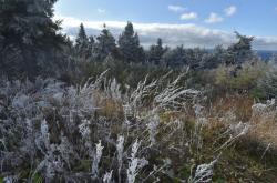Namrzlá tráva a větve stromů na Klínovci