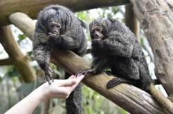 Ve zlínské zoo nadělují zvířatům