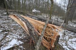 Ilustrační foto: Následky větru