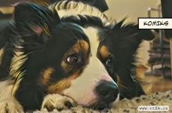Zvířata nepřenášejí koronavirus