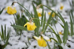 Mráz na jaře