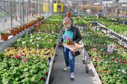 Ilustrační fotografie: Zahradnictví