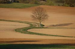 Ilustrační fotografie: Polní cesta