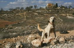 Židovská osada Shvut Rachel na Západním břehu Jordánu
