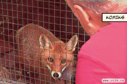 Záchranným stanicím pro zvířata chybí peníze na výplaty i nutné opravy