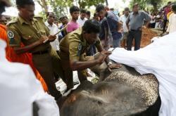 Piety a pohřebu slona se na Šrí Lance účastní mnoho lidí včetně zástupců státu, místní správy a duchovních osob. Slon Hemantha (na fotografiích) zemřel ve věku 23 let. ve městě. S mahoutem byl spjatý celý život