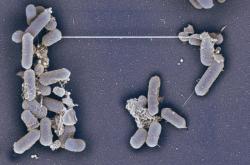 Digitálně kolorovaný snímek ukazujíc nanotrubičky