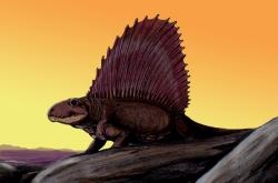 Dimetrodon, tvor z období Permu