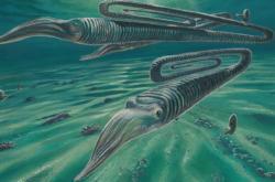 Diplomoceras - rekonstrukce