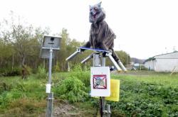 Japonské město chrání před medvědy robotičtí vlci