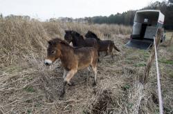 Divocí koně na Pardubicku