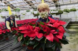 Vánoční hvězda směřuje k českým zákazníkům