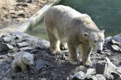 Medvědice Cora s medvídětem Noriou