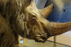 Pravěký nosorožec, ilustrační foto