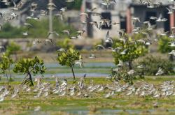 Jedním z nejvzácnějších světových mokřadů světa patří čínský ostrov Chaj-nan