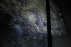 Forma života pod Antartidou
