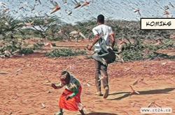 Farmáři v Keni bojují s invazí sarančat