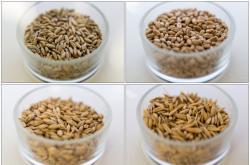 Žito, pšenice, ječmen, oves