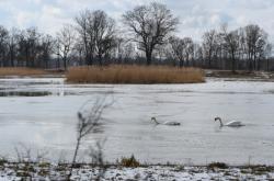 Obnova rezervace Bažantula v CHKO Poodří