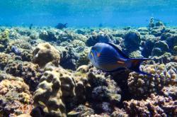 Koráli v Rudém moři