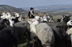Pastýřka Kamila Zavadilová na Stolové hoře