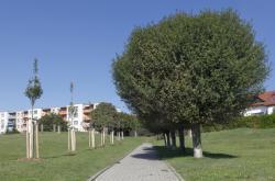 Stromořadí v Brně-Líšni