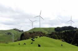 Pastvina pro krávy poblíž novozélandského Hawke's Bay