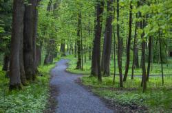 Polička zvažuje přeměnu lesoparku Libháj na rekreační oblast