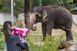 Slon v ústecké zoo