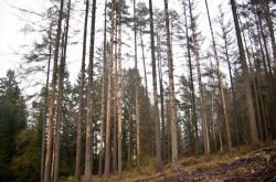 Les poškozený kůrovcem