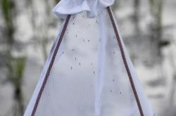 Komáři chycení do sítě