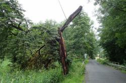 Bouřkou poničený strom na Železnobrodsku