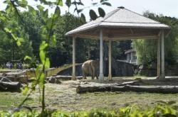Sloni indičtí v ostravské zoo mají nové stínidlo