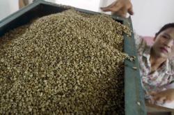 Třídění kávy v továrně v Hanoji