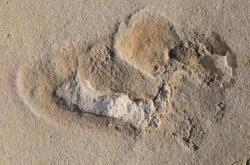 Stopy nalezené na Krétě