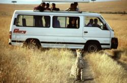 Safari v Masai Mara
