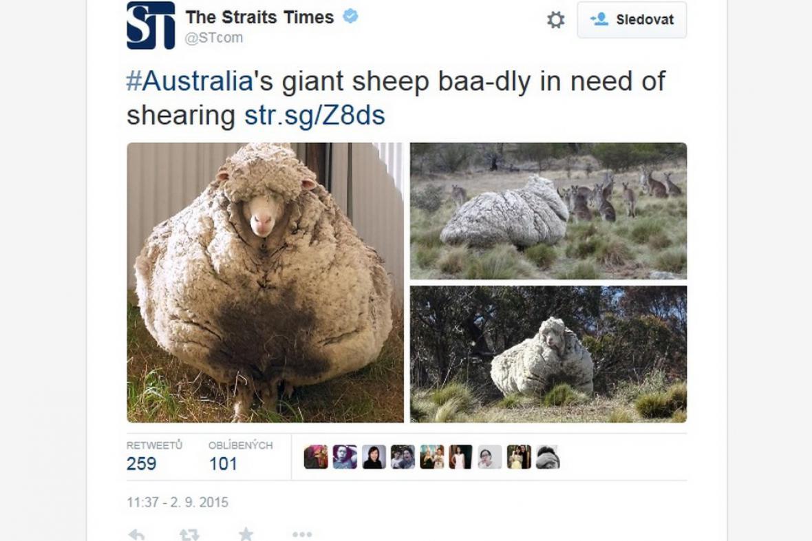 Zarostlá ovce
