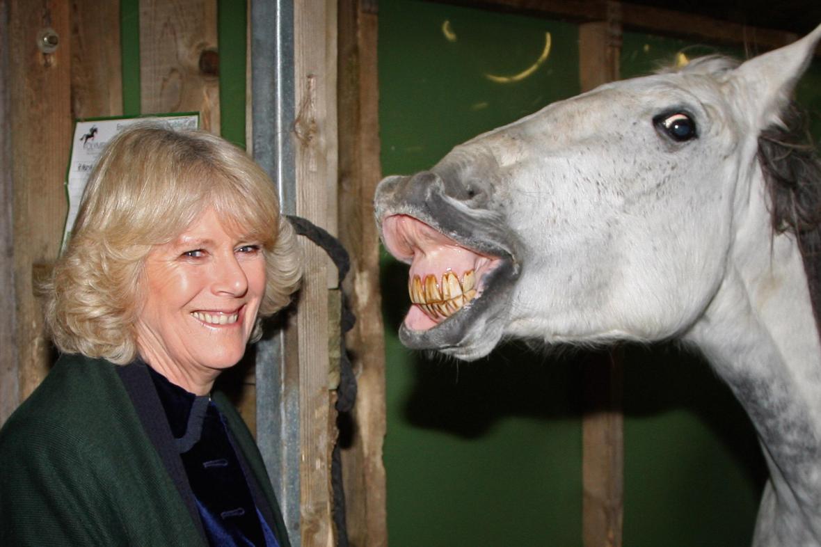 Vévodkyně z Cornwallu na Mezinárodní koňské show v Londýnské Olympii