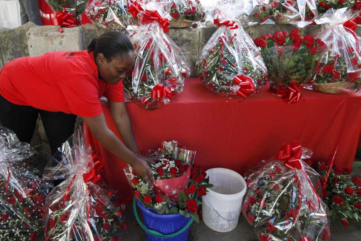 Pěstování růží v Keni