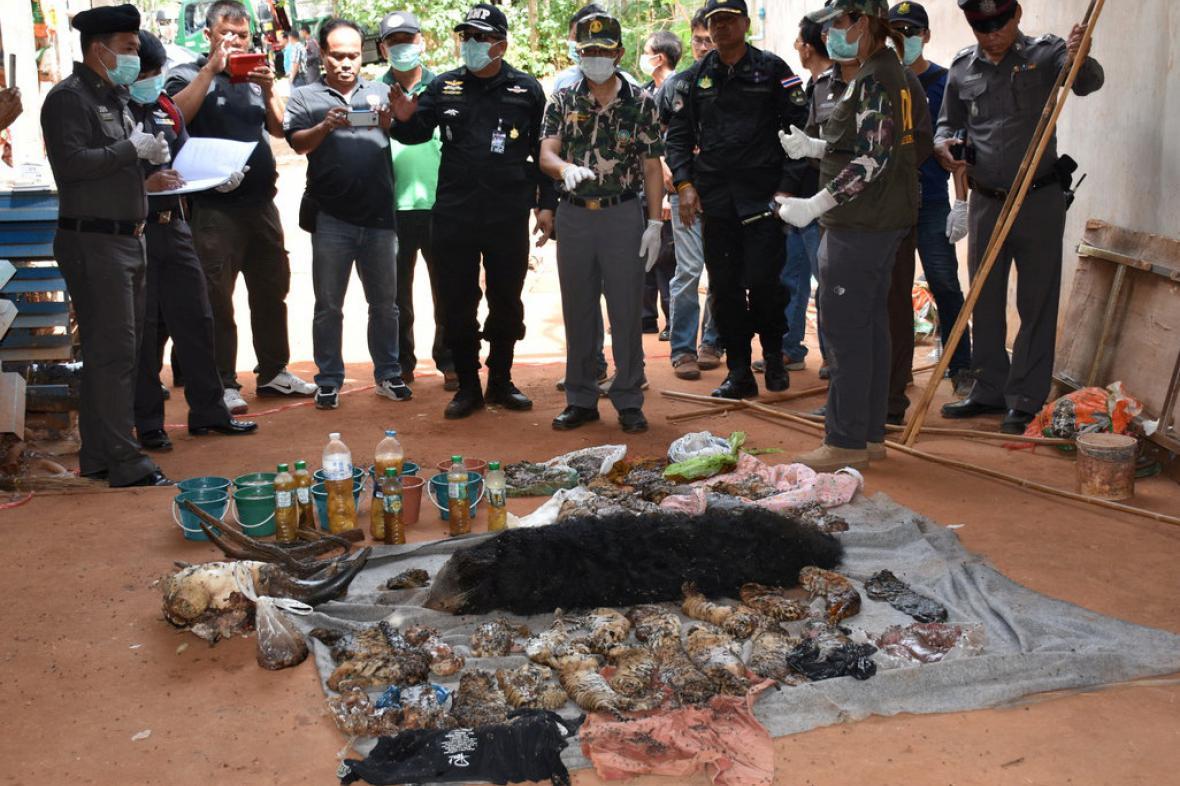 Mrtví tygři nalezení v thajském chrámu