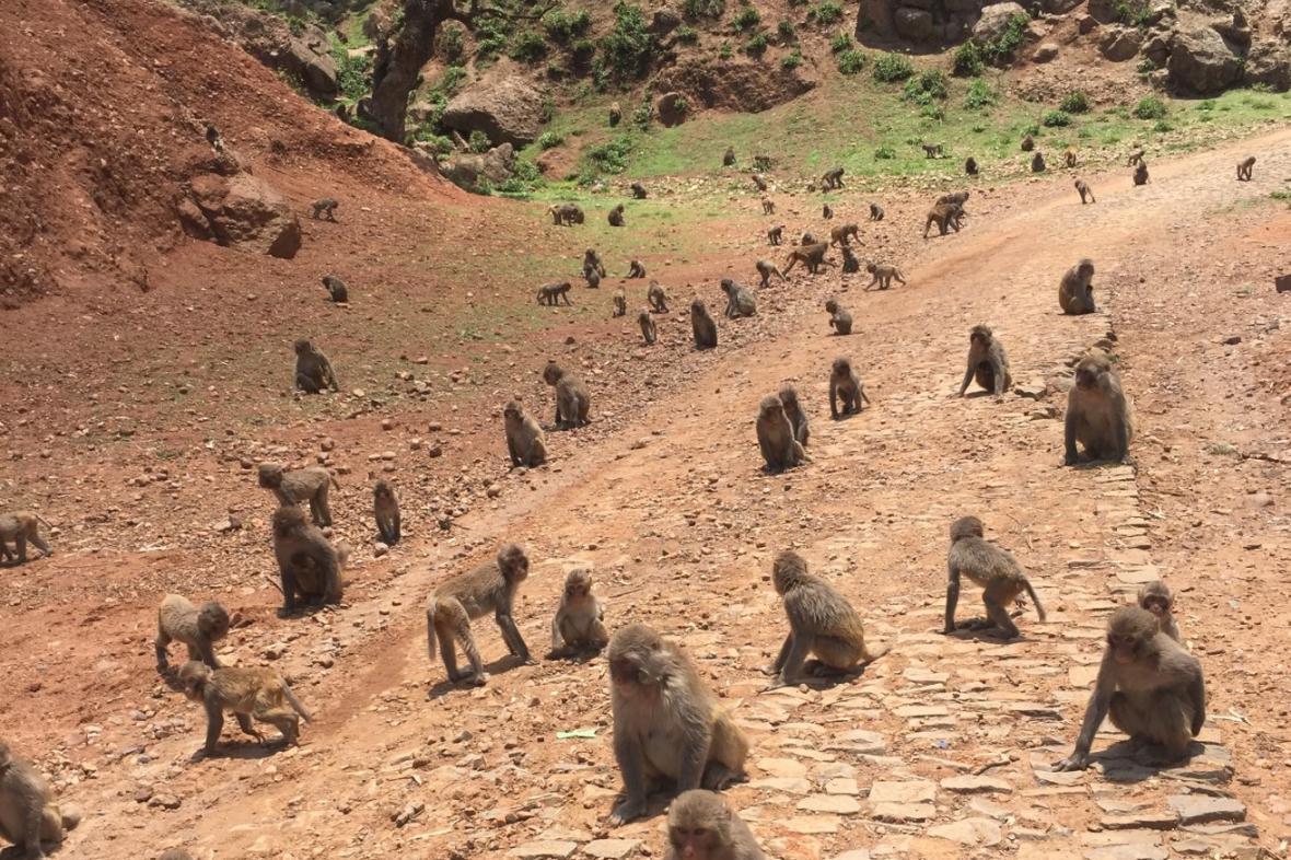 Makakové v Sečuanu